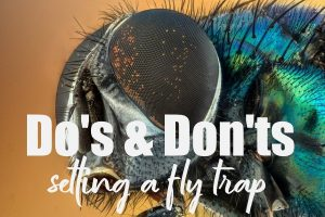 Setting a Fly Trap