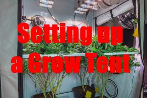 5 Benefits Of Setting Up A Grow Tent