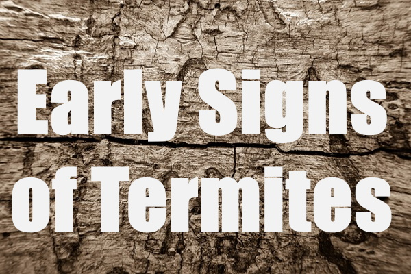 Early Signs of Termites