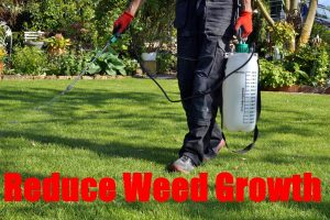 How To Reduce Weed Growth In The Backyard