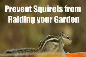 Prevent Squirrels