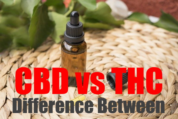 The Difference Between CBD and THC: An Informative Guide