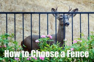 How to Choose Fencing