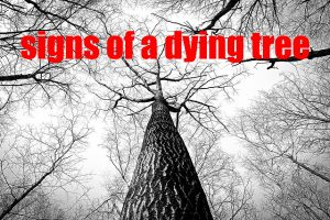 Signs of a Dying Tree