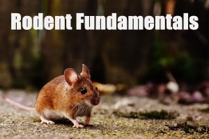 Rodent Fundamentals