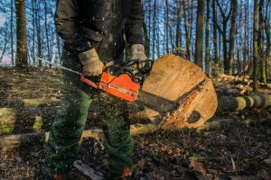 5 Benefits of Hiring A Professional Tree Service