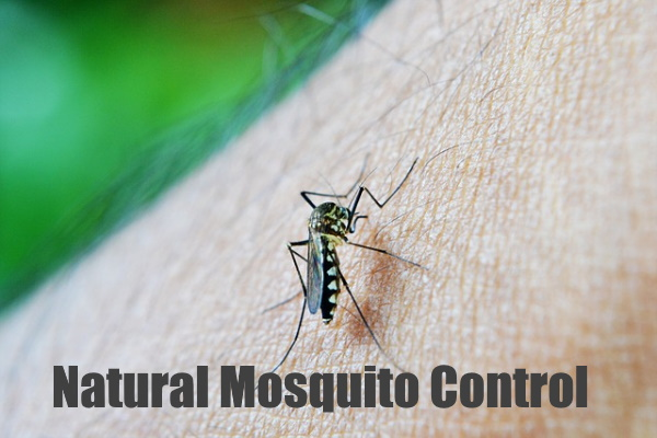 Natural Mosquito Control Tips
