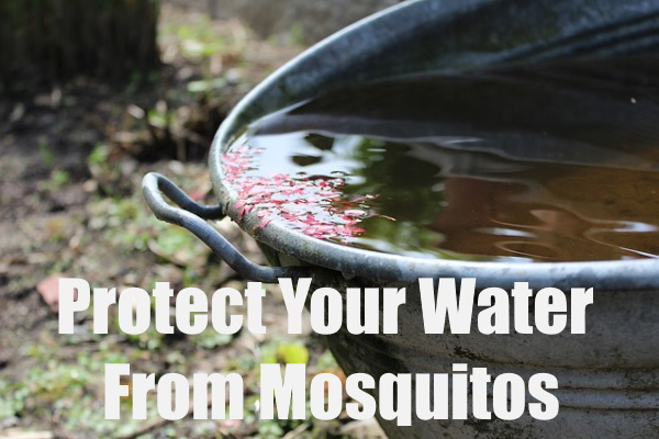 Harvested Rainwater from Mosquitos