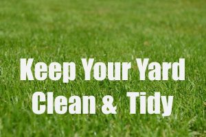 Yard Clean and Tidy